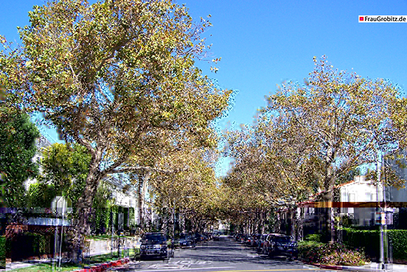 Los Angeles - Herbst in Beverly Hills